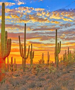 Cactus Arizona Desert paint by number