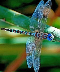 Colorful Dragonfly paint by number