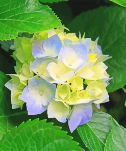 Beautiful Hydrangeas paint by number