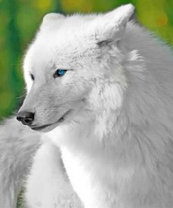 White Cute Wolf Paint By Numbers