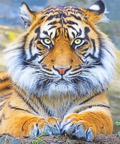 Beautiful tiger eyes adult paint by numbers