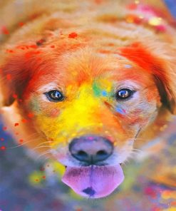 Cute colorful dog adult paint by numbers