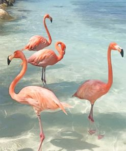 Flamingos birds adult paint by numbers