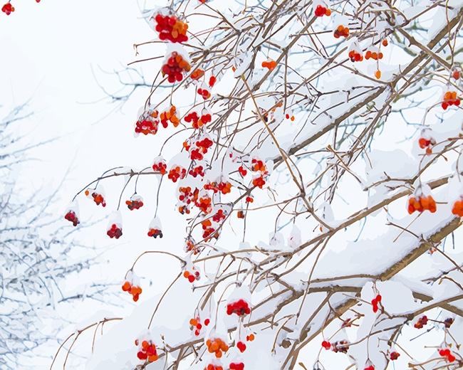 Red flowers snow adult paint by numbers