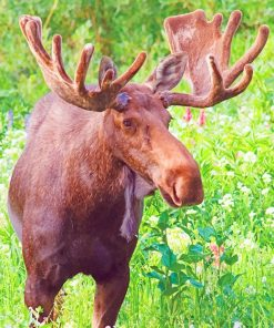 Cool Moose paint by number