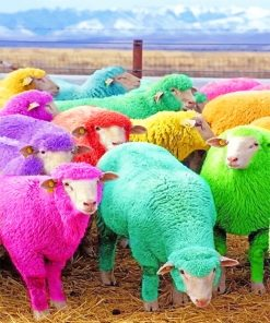 cute colorful sheeps adult paint by numbers