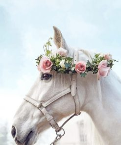 Horse Wearing Flowers Crown paint By Numbers