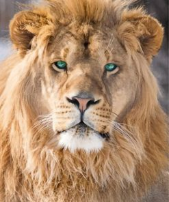 king of Jungle Lion paint by numbers