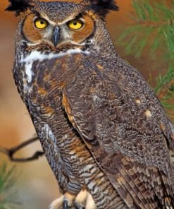 Great Horned Owl paint by numbers