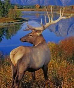 Merriam's Elk paint by numbers