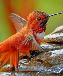Ruby Throated Hummingbird paint by numbers