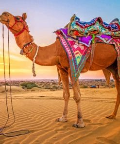 Sunset Camel Paint By Numbers