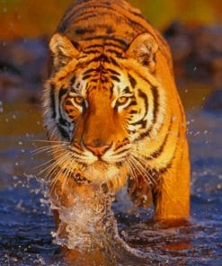 Bengal Tiger In The River paint by numbers