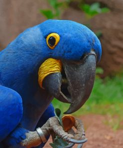 Blue Macaw Parrot Bird paint by numbers