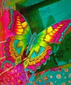 Colorful Butterfly Insect paint by numbers
