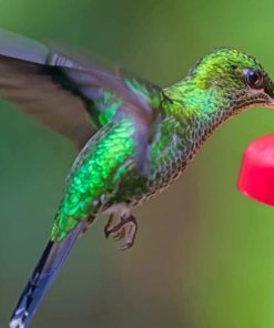 Green Hummingbird Flying paint by numbers