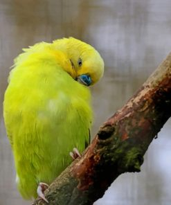 Yellow Feathered Wing Parrot paint by numbers
