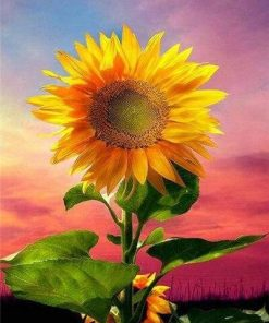 Sunflower on Sky Paint By Numbers