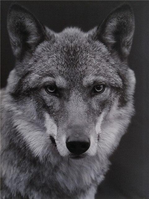 Wolf Black And White paint by numbers