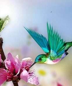 humming bird paint by numbers