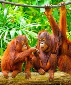 Orangutan Monkeys Paint By Numbers