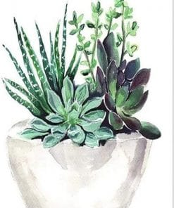 Succulent Pot Paint By Numbers
