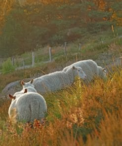 Sheep In The Field paint by numbers