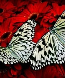Butterflies on Red Flowers paint by numbers