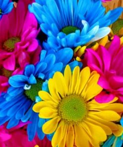 Colorful Daisies Paint by numbers
