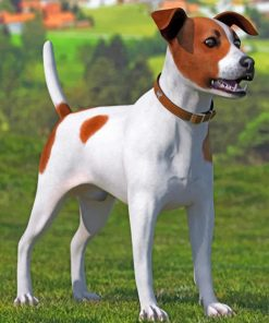 Spotted Jack Russell Terrier Paint by numbers