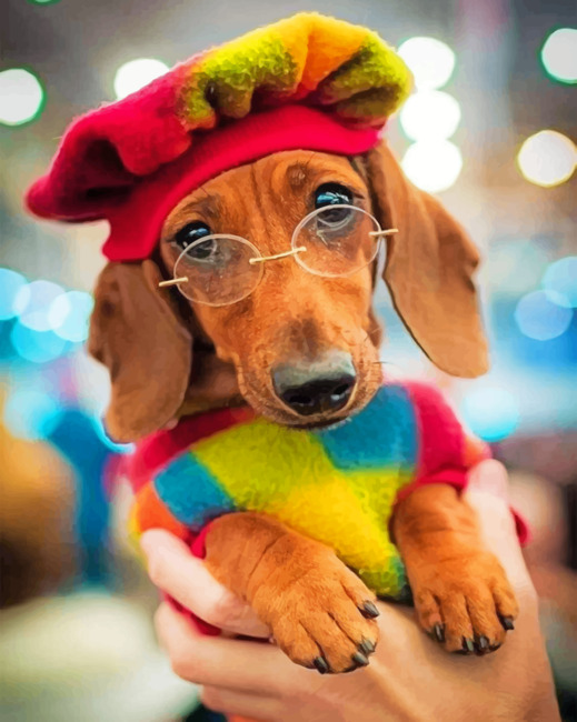 Stylish Dachsund paint by numbers