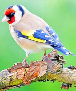 European Goldfinch paint by numbers
