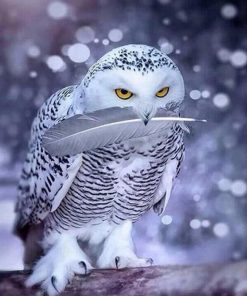 White Owl paint by numbers