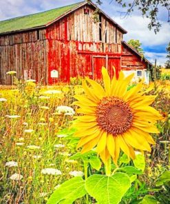 Old Barn And Sunflowers Paint by numbers
