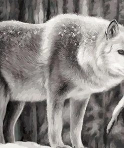 Coyote Wolf paint by numbers