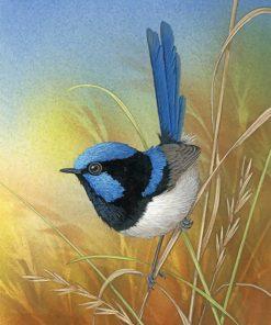 Blue Wren Bird Paint by numbers