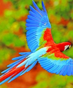 Flying-Colorful-Scarlet-macaw-paint-by-numbers