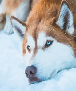 Brown Husky Paint by numbers