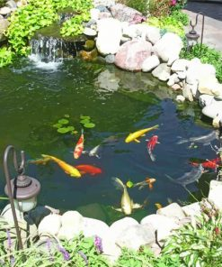 Koi Fish Pond Paint by numbers