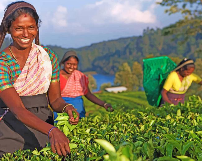 Womens phone numbers srilankan sri lankan