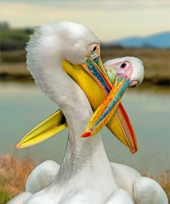 White Pelican Paint by numbers