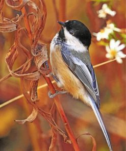 Early-bird-chickadee-paint-by-numbers