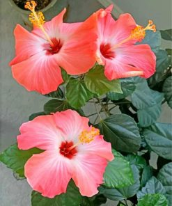 aesthetic-hibiscus-paint-by-numbers