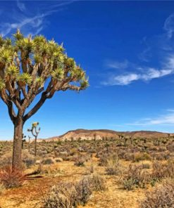aesthetic-joshua-tree-in-desert-paint-by-number