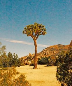 aesthetic-joshua-tree-paint-by-number