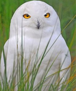 aesthetic-white-owl-paint-by-number