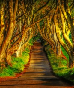 amazing-dark-hedges-paint-by-number