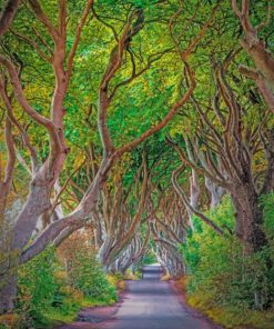 beautiful-dark-hedges-paint-by-number