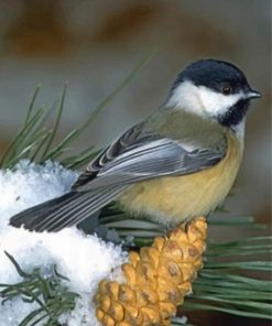 black-capped-chickadee-paint-by-number