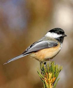 black-crapped-chickadee-paint-by-numbers